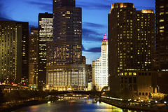 Wrigley Building surrounded by skyscrapers Royalty Free Stock Photos