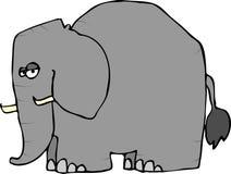 Wrinkled Elephant Stock Photo