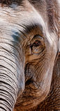 Wrinkled elephant face. When the wrinkled elephant face covers the whole picture, I was deeply impressed Stock Photography