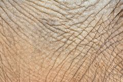 Wrinkled elephant skin Royalty Free Stock Photography
