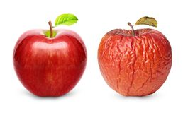 Wrinkled and fresh apple isolated Stock Images