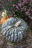 Wrinkled green pumpkin Royalty Free Stock Images