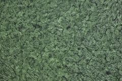 Wrinkled ha sgualcito la struttura di superficie - backgrou astratto verde scuro fotografie stock libere da diritti