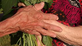 Wrinkled hand of grandpa stroked his wife`s hand. stock footage