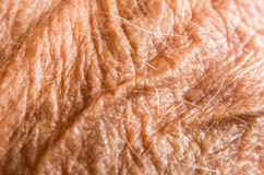 Wrinkled skin on hand Stock Photo
