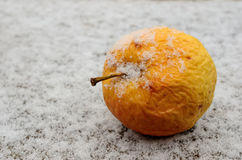 Wrinkled yellow apple covered with snow Royalty Free Stock Image