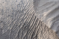 Wrinkles. The elephant wrinkles occur after the mud on its body dries Stock Image