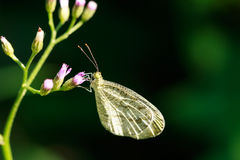 Write butterfly on grass flower Royalty Free Stock Photo