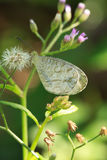 Write butterfly on grass flower Royalty Free Stock Image