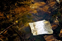 Write On Me. Leaves and weeds come back to life after being buried under ice.  Early morning light gives a nice glow overall.  A small piece of bark floating on Stock Photo