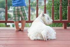 Write terrier lying near boy's feet Stock Photography
