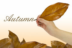 Writing the autumn Stock Image