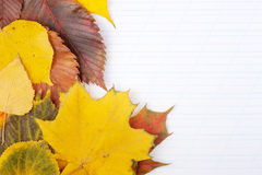 Writing-book and autumn leaves Stock Photos