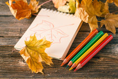 Writing-books, multi-coloured pencils in a cup and autumn leaves Stock Images