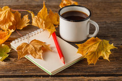 Writing-books, multi-coloured pencils in a cup and autumn leaves Stock Image