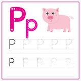 Writing card Alphabet P. Writing card use for kid. A handwritten card. Cards can be used to teach preschoolers Royalty Free Stock Images