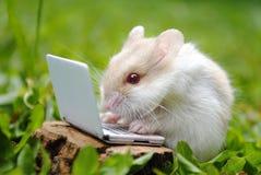 Writing essays Royalty Free Stock Photo