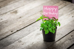 Writing happy birthday on card and ornamental plants in pots Stock Photo