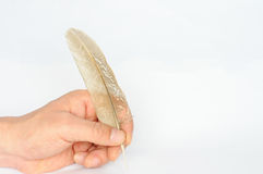 Writing with a piece of feather Stock Images