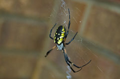 Writing spider Royalty Free Stock Photography