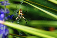 Writing Spider Weaves a Web Stock Photo