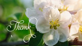 Written animation Thank you calligraphy lettering text with Ornate frame elements on blossoming tree background. Vintage. And filigree decoration. Filigree stock footage