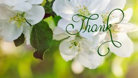 Written animation Thank you calligraphy lettering text with Ornate frame elements on blossoming tree background. Vintage. And filigree decoration. Filigree stock video