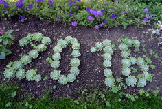 2016 written by plants. Year 2016 written in a flowerbed Royalty Free Stock Photos