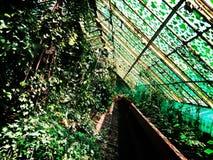 Wrocław- beautiful place. Photo from Wrocław. Unsual green garden Stock Photo
