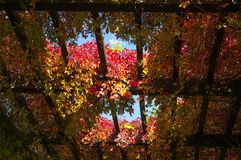 WrocÅ-'Aw-Brunnen-Pergola Bunter Herbstefeu auf Dach Stockfoto