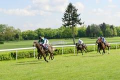 Wrocławski, Polska, Maj - 10, 2015: Kończy rasy dla 3 roczniaków koni grupy tylko III w Wrocławskim Fotografia Royalty Free