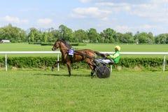 Wrocławski Polska Maj 10 2015: Prezentacja konie zanim zawody międzynarodowi rasa dla 3yearold i starego kłusaka francuza sulki Fotografia Stock