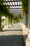 Wroclaw pergola in the sun Royalty Free Stock Image