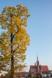 Wroclaw, Polônia 22 de outubro de 2016 Uma árvore completamente de dourado amarelo Foto de Stock