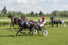 Wroclaw Poland May 10 2015: Finish the International race for 3yearold and older trotters French sulki in Wroclaw. Stock Photos