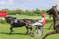 Wroclaw Poland May 10 2015: Finish the International race for 3yearold and older trotters French sulki in Wroclaw. Royalty Free Stock Images