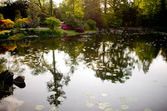 Wroclaw. The pond in a Japanese garden Royalty Free Stock Photography