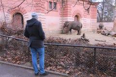 Wroclaw zoo Arkivfoton