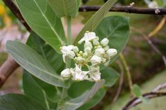 Wrona kwiaty Zdjęcie Stock