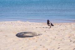 Wrona na plaży Zdjęcia Stock