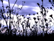 Wrong weather in autumn. Ant's view of a field with a wrong weather in autumn royalty free stock images
