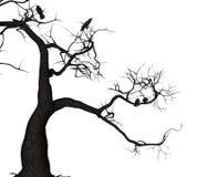 Wroni drzewo Zdjęcie Royalty Free