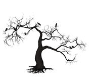 Wroni drzewo Obrazy Stock