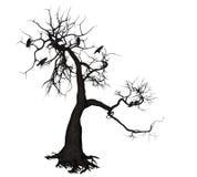 Wroni drzewo Fotografia Stock