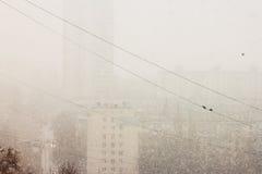 Wrony i śnieg Zdjęcia Royalty Free