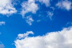 Wrony latają w niebie Zdjęcia Stock