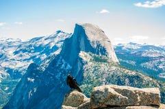 Wrony przyglądają się widok Yosemite ` s połówki kopuła Zdjęcie Stock