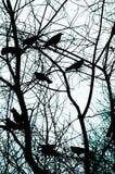 wrony tła abstrakcyjnych Fotografia Royalty Free
