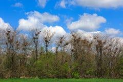 wrony w gaju Zdjęcie Royalty Free