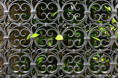 Wrought iron gate & hedge, background Royalty Free Stock Photography